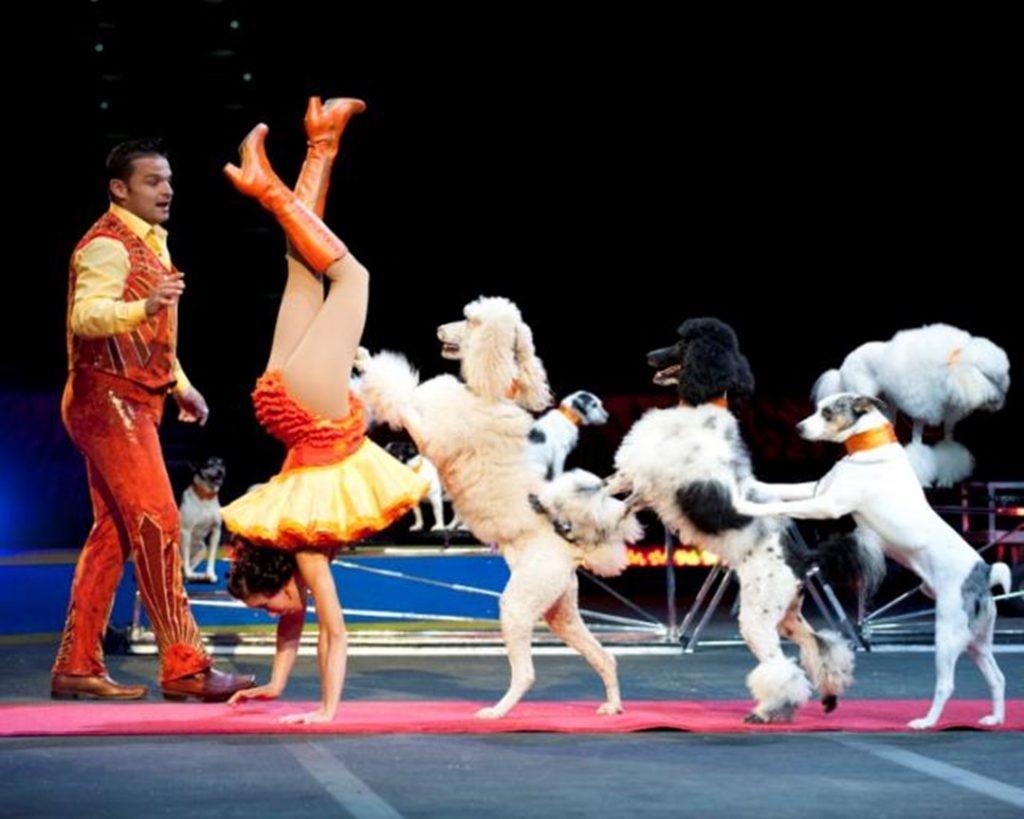 circus_world_2